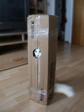 robot-cat