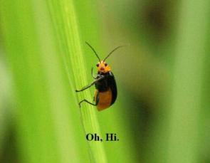 Bug Says Hello