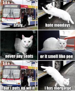 Kitty Salaryman