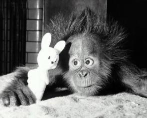 orangutan and bunny