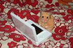hamster ds gamer