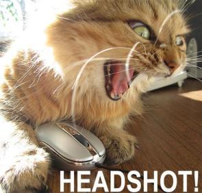 Headshot Kitty