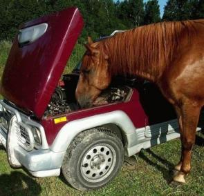 Horse Mechanic