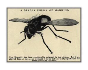 Housefly – A Deadly Enemy of Mankind