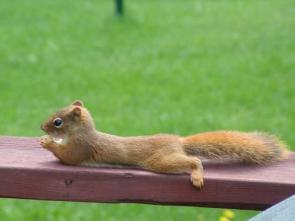 Squirrel Rest