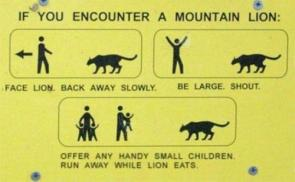 Mountain Lion Encounter Instructions