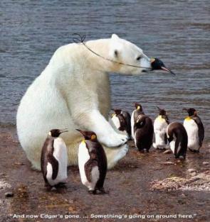 Polar Bear Penguin Disguise
