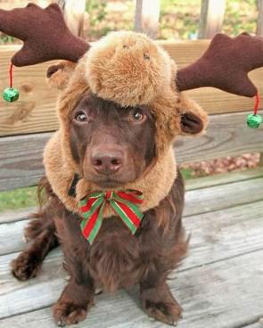 reindeer-doggy