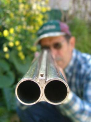 Shot Gun View