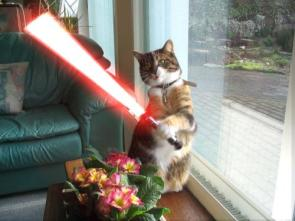 Dark Jedi Cat