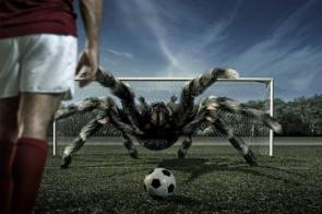 Spider Goalie
