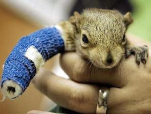 Squirrel Cast