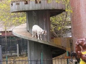 Goat Playhouse