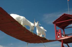 Goat Bridge