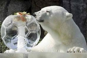 Polar Bear's Ice Ball