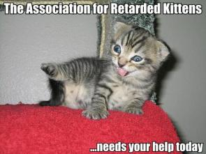 The Association for retarded kittens needs your help today