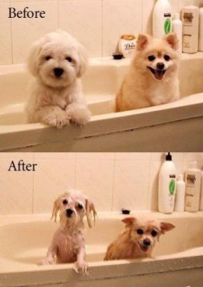 Dogs before and after bath time