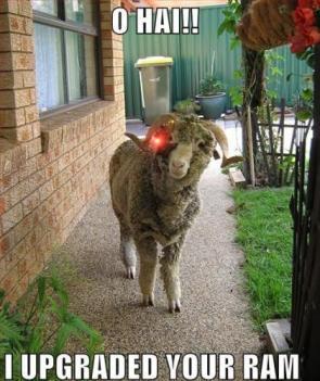 O Hai!! I upgraded Your Ram