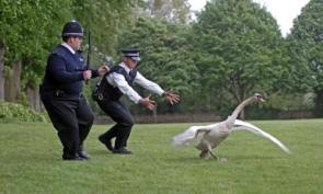 Cops Vs Bird