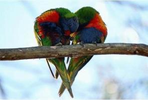 Lovely Heart Birds