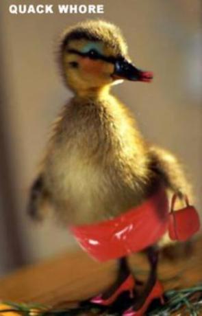Quack Whore