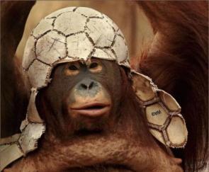 Soccer Orangutan