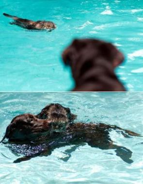 Dog Rescues Cat From Water