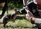 marsupial close up