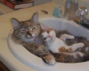 Kittens In A Sink