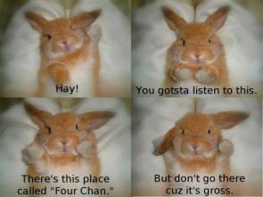 4chan bunny