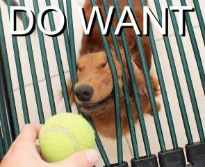 Doggy – Do Want