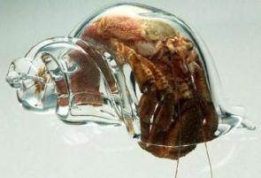Glass Hermit Crab