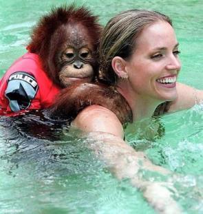 Orangutan Swimmer