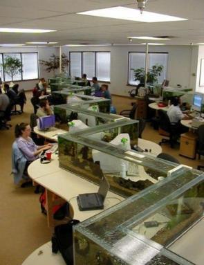 Awesome Office Aquarium