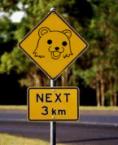 pedobear – next 3 km