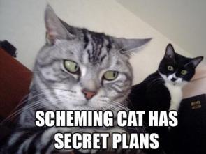 Scheming Cat Has Secret Plans