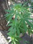 Clean Weeds