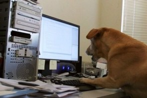 A Dog Using The Internet