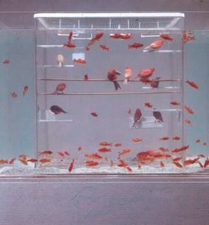 Fish Bird Tank