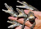 Fist Full of Crocs