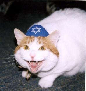jew cat