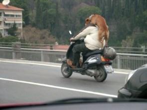 Moped Riding Dog