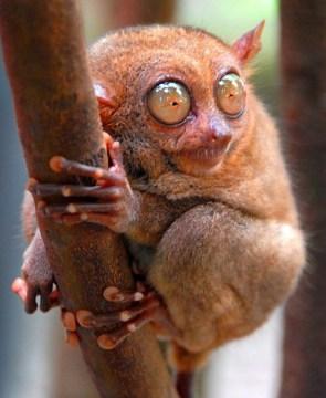 Bug Eyed Monkey Thing