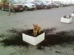 Dog Vs Planter