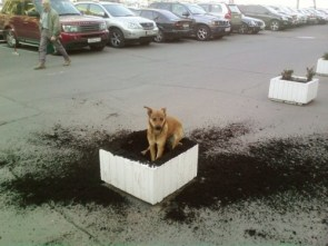 Dog Vs Planter
