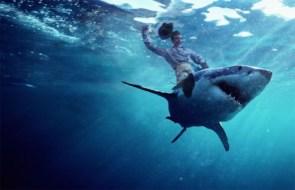 Shark Rodeo Rider
