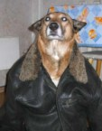 Bomber Jacket Doggie