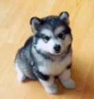 cute doggy on hardwood floor