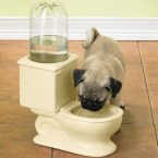 doggie water bowl