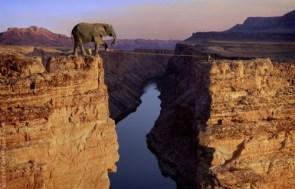 Elephant Tight Rope